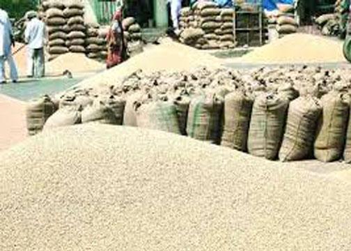 Record of highest paddy purchase in Chhattisgarh